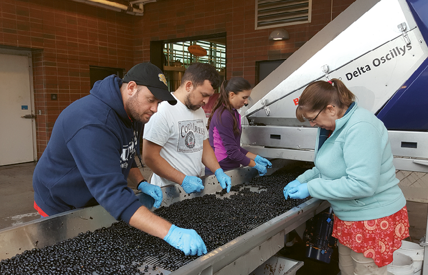 Students enrolled in Surry County Community College's enology program learn every aspect of winemaking by doing. It's the only school in the Southeast with a licensed and bonded winery.