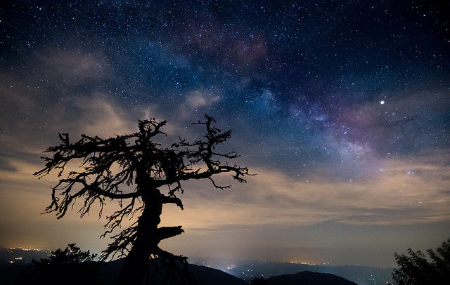 Honorable Mention: Milky Way by Teresa Sorbilli (Amateur category)