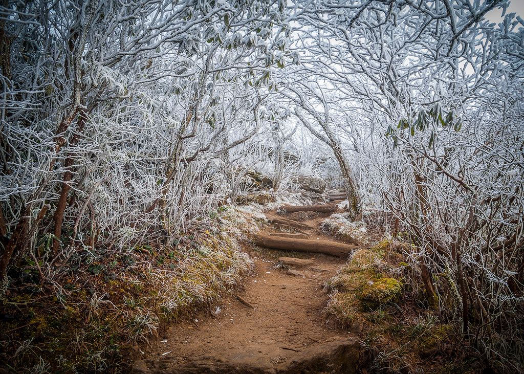 Honorable Mention: Entrance to Winter by Robert Stephens (Professional category)
