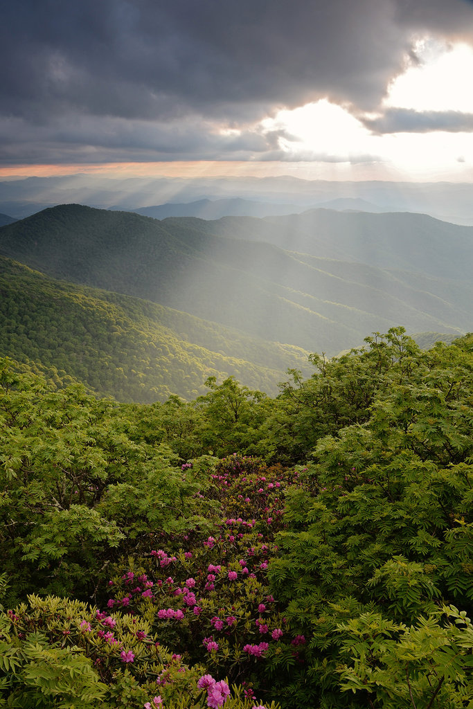 Honorable Mention: Craggy Gardens in Bloom by Laura Sparks (Professional category)