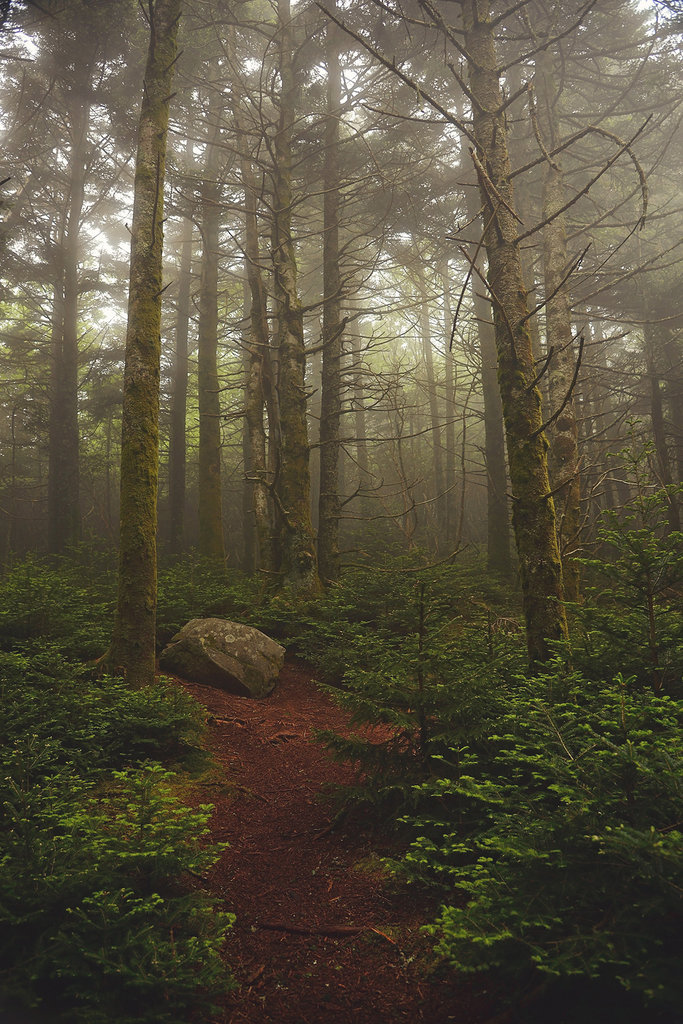 Honorable Mention: Along the Appalachian Trail by Laura Sparks (Professional category)