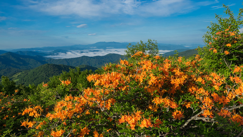 Honorable Mention: Azaleas and Mountains by Jeff Clark (Amateur category)