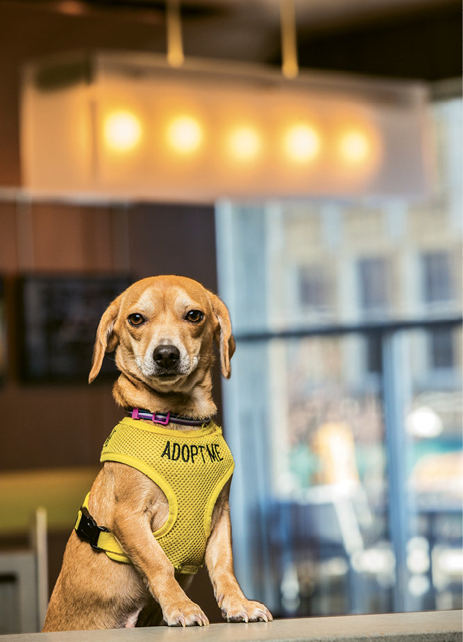 Pet-Friendly Aloft Asheville Downtown operates a dog foster program, which has helped find new homes for more than 100 pound pups.