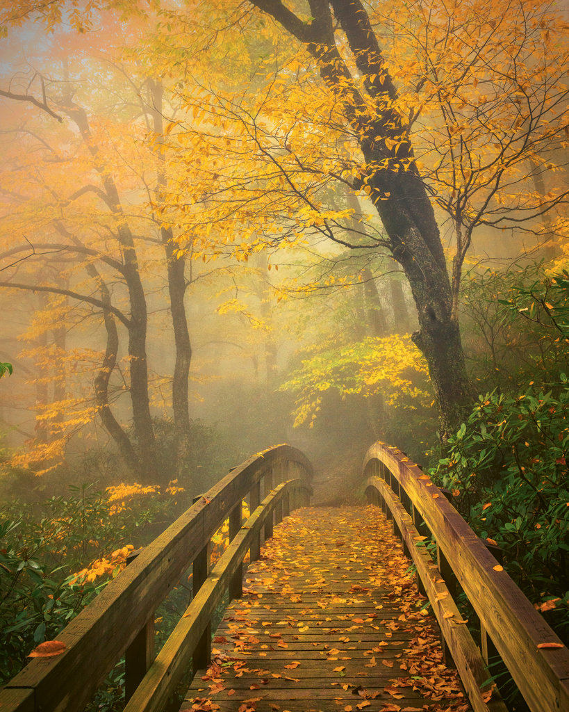 FINALIST - AUTUMN'S BRIDGE TO HEAVEN - Mike Koenig - The soft glow of morning light against fog set the tone for this photo taken along Rough Ridge Trail near Boone.  Amateur category