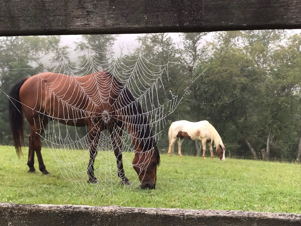 HONORABLE MENTION - DIFFERENT PERSPECTIVE - Peggy B. Wilson - Taken on the photographer's farm in Asheville. Amateur category