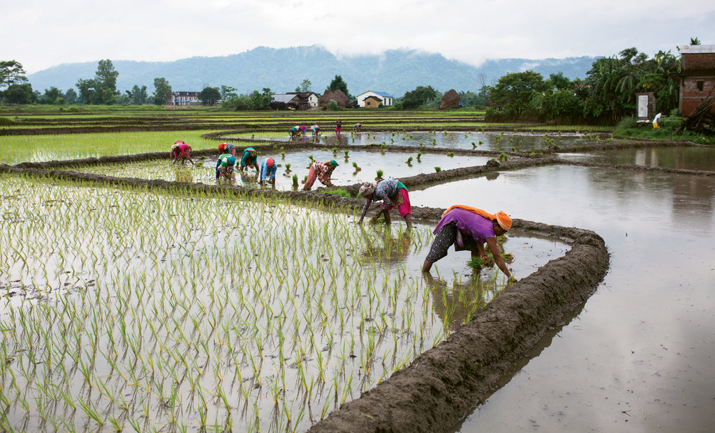 Drink Up - The Nepal program focuses on a sustainable approach to water, hygiene, sanitation, and now agricultural irrigation.