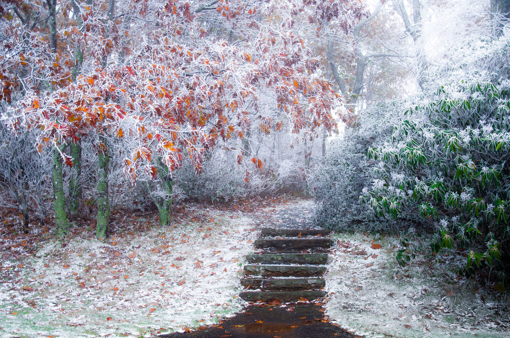 HONORABLE MENTION - FROSTED AUTUMN - Bistra Hristova - Frosted oaks and rhododendrons at Mt. Pisgah. Professional category