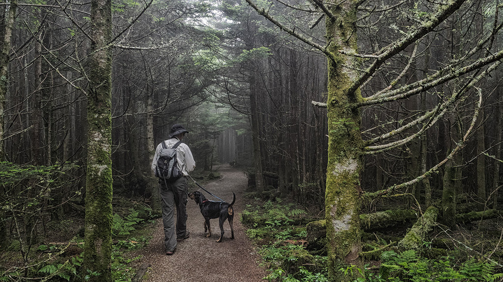 Honorable Mention: A Man and His Hound by Jeff Clark (Amateur category)